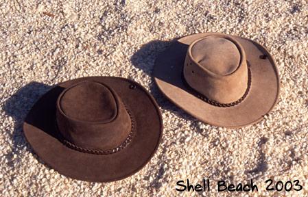 Shell Beach 2003