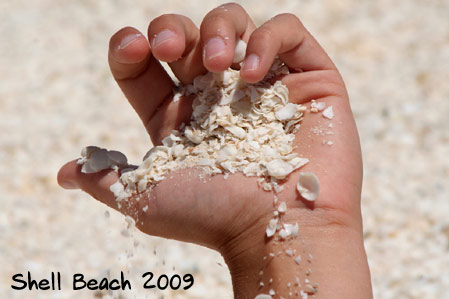 Shell Beach 2009