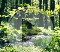 Wald hinter dem Botanischen Garten in Chemnitz